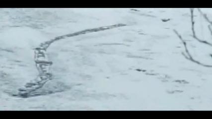 Заснеха исландското чудовище от Лох Нес