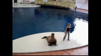 Тюлен Танцува На Песен На Майкал Джексан