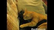 Котешка любов