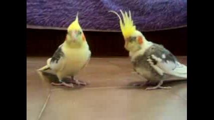 Sladkite Papagal4eta Lori I Poli