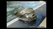 Топ 10 Ужасяващо Грозни Риби!