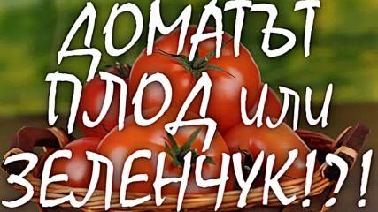 """""""Доматът-Плод или Зеленчук!?!"""""""