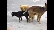 Кучета Правят Тройка Дзъма