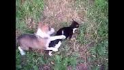 Най - Смешните Животни - Борба Куче С Котка