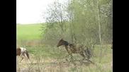 Horses - Коне ...