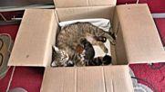 Котка осинови две новородени катерички