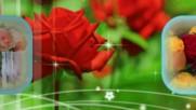Цветы делают нас счастливее... Ottmar Libert - La Valetta
