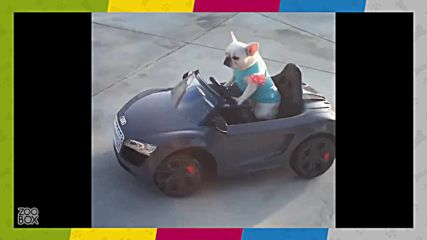 Най-сладкото видео за днес