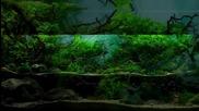 Най-красивите аквариуми - подводни пейзажи