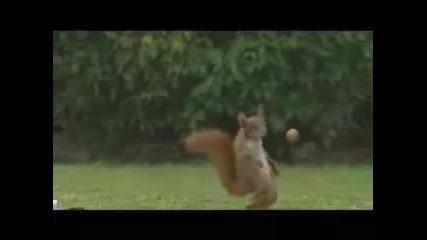 Катерица Футболист (смях)