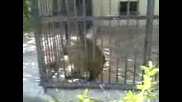 Маймуна В Клетка