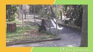 Изцепки в зоопарка