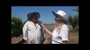 минути за пчеларство разговор с Иван Бакърджийски Част-1