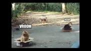 Смешни Котки - Компилация Снимки
