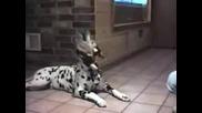 Невероятно говорещи котки кучета