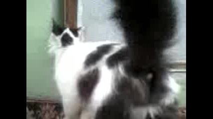 Koтка