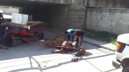 Роми пребиват жестоко кон на пътя!