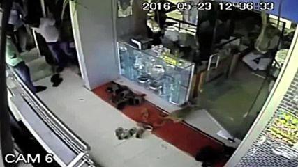 Индия: Маймуна ограбва бижутериен магазин