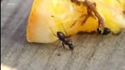 Мравка пие водка мислейки, че е вода
