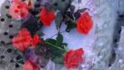 Cvetы v snegu. Poly Moria. Saksofon.