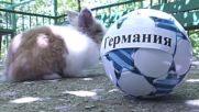 Fur the love of football! See Pushik the Bunny predict results of WC weekend fixtures