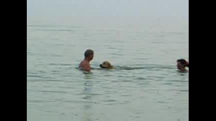 Куче в Морето