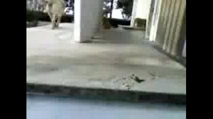 Хранене На Котки Със Семки