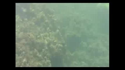 Roys Underwater Weekend