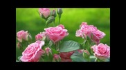 Faith Hill & Tim Mcgraw - Let's Make Love