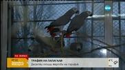 Десетки папагали - жертва на трафик