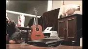 Котка бута телевизор върху лицето на стопанина си!