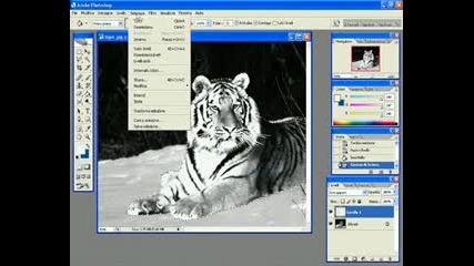 Преoбразяване На Тигър С Photoshop