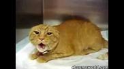 Разбесняла се котка !!!