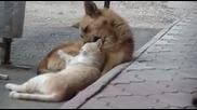Ето това са мързеливи животни