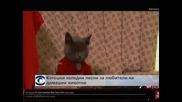 Котешки коледни песни за любители на домашни любимци
