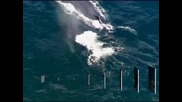 Опитите за спасяване на малкия гърбат кит край Австралия бяха временно прекратени