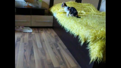 Cat and rabbit playing
