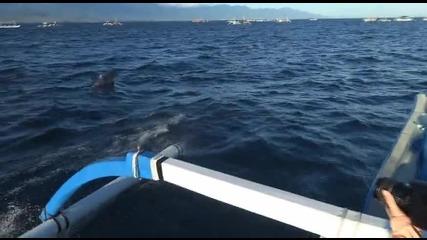 Плуване с делфини (