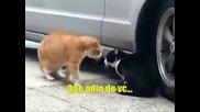 Котки, Gatos Discutindo (legendado)