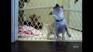 Кученце направи успешно бягство от затвора