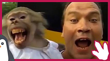 Маймуните покоряват света