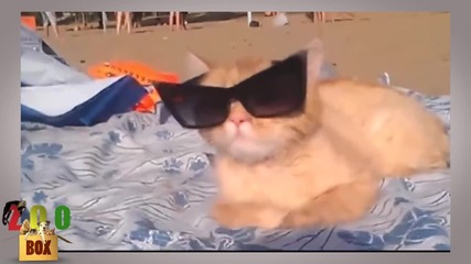 Котки се мислят за хора (забавна компилация)