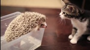 Коте и таралеж