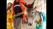 Фестивал почете магаретата в Мексико