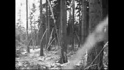 Темнозорь - Ледяной Простор