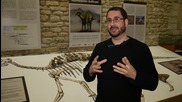 Spain: Newly discovered 'sail-backed' dinosaur species presented in Morella