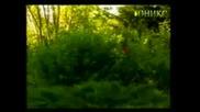 orkestyr varnenci tez cherveni domati vbox7