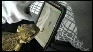 Игуана играе игра на телефон