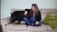 Фела - прасето, което се мисли за куче