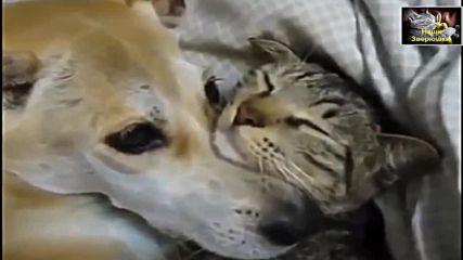 Необичайно приятелство - между животни и хора